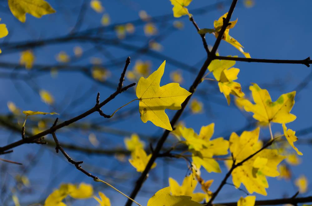 Gelb auf Blau - Herbst