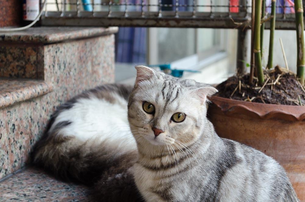 Cat content in Bangkok