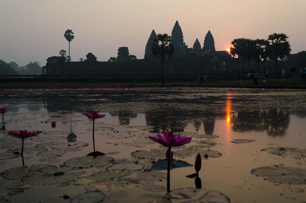 Seerosenteich in Angkor Wat