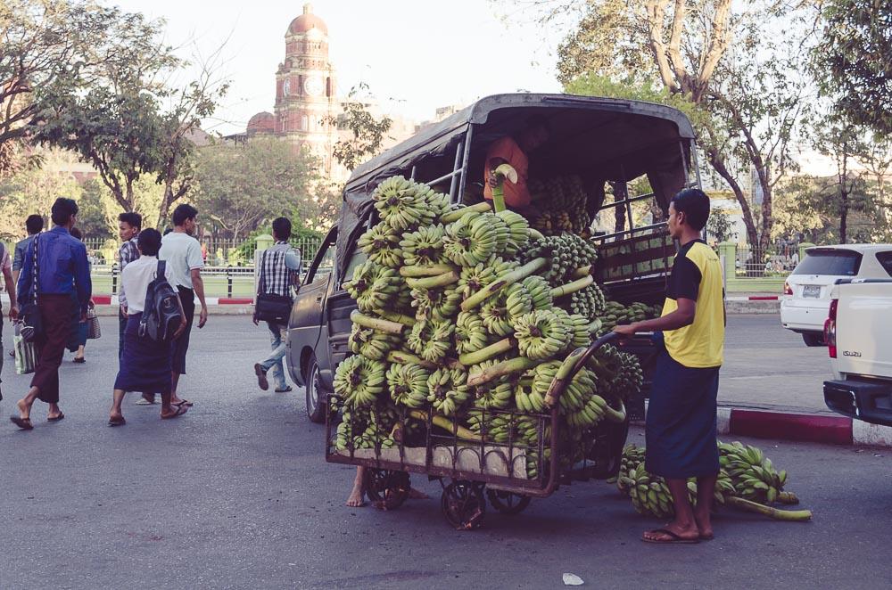 Bananenstauden in Yangon