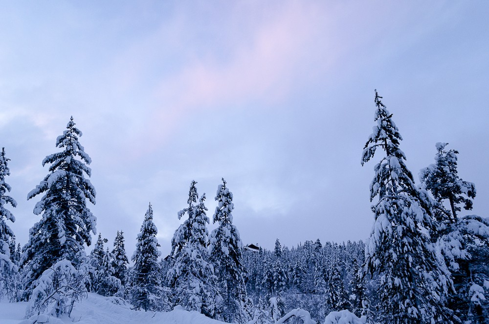 Winterlandschaft in Lapland