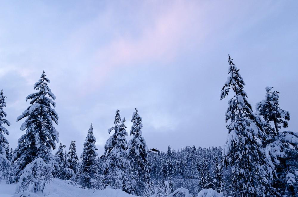 Winterlandschaft in Lapland