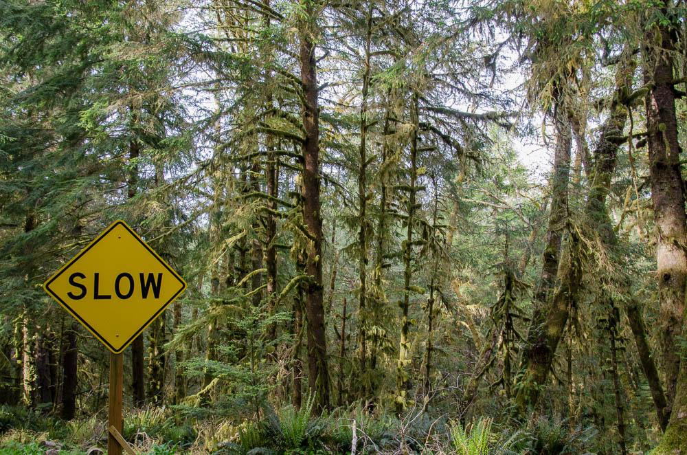 Oregon: Ecola State Park